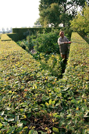 Eveil du jardin Entretien des espaces verts