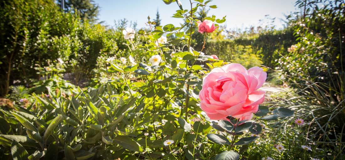 Jardin anglais archives agr ment du jardin for Jardin anglais guingamp