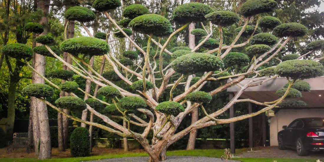 Graminee agr ment du jardin for Jardin en seine 2015